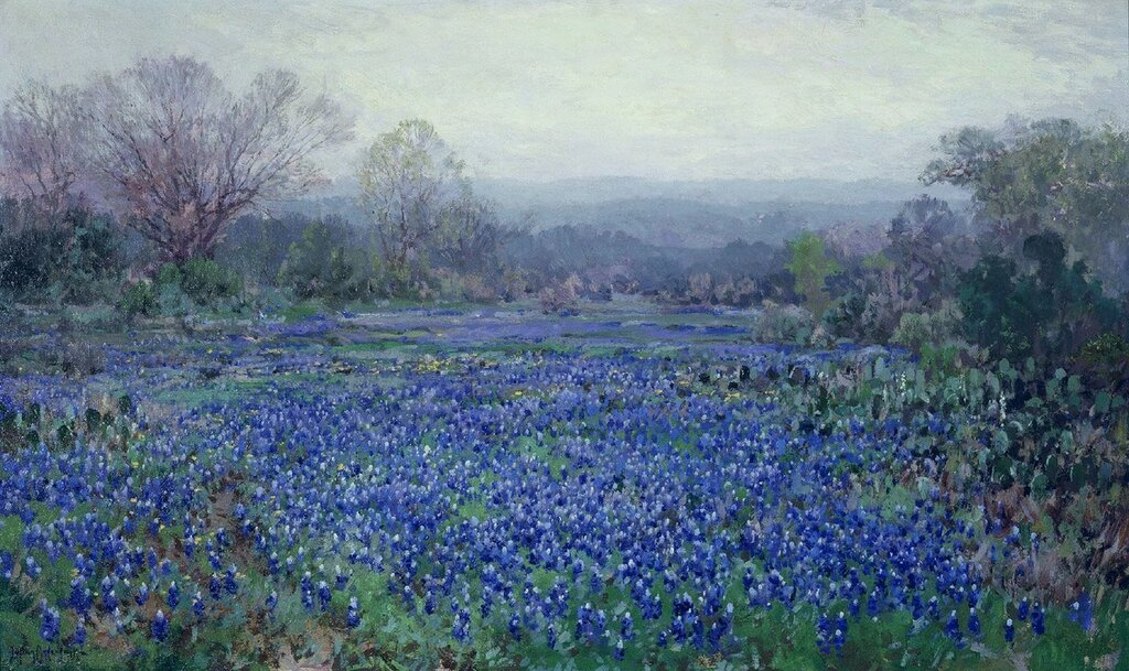 Field of Bluebonnets.jpg