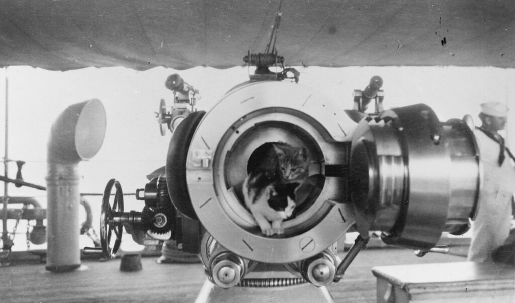 Two cats pose in the breech of a U.S. Naval Gun of about 4'' caliber, prior to World War I.
