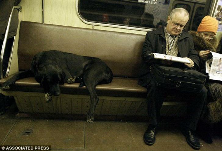 Большинство людей настолько привыкли видеть бродячих собак в метро, что не обращают на них внимания,