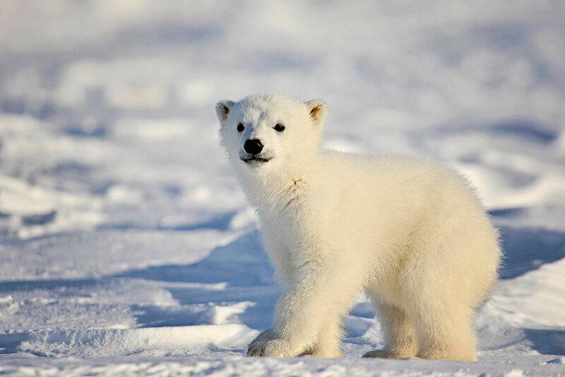 Медвежонок. Автор фото: Michelle Valberg
