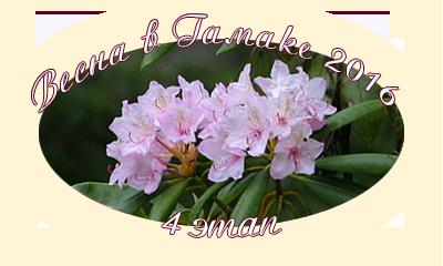 Весна в Гамаке. 4 этап