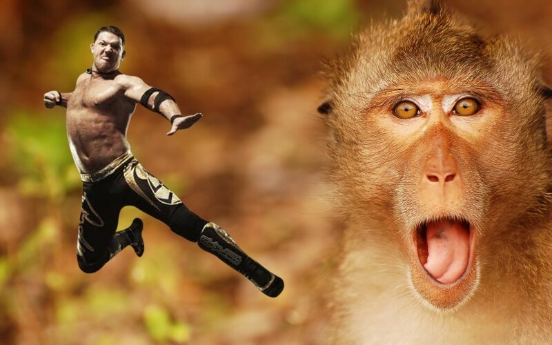 Индийская обезьяна-рестлер сбила мужчину с ног на улице