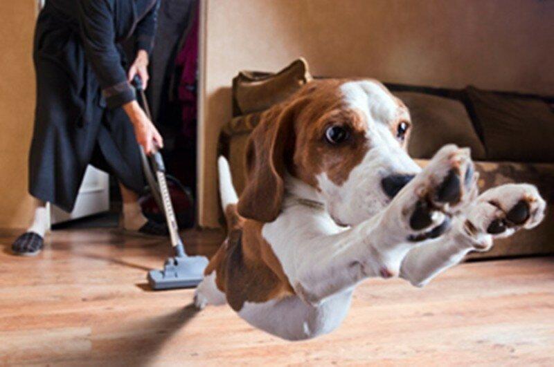 Собака и пылесос. Смешное видео о домашних питомцах!