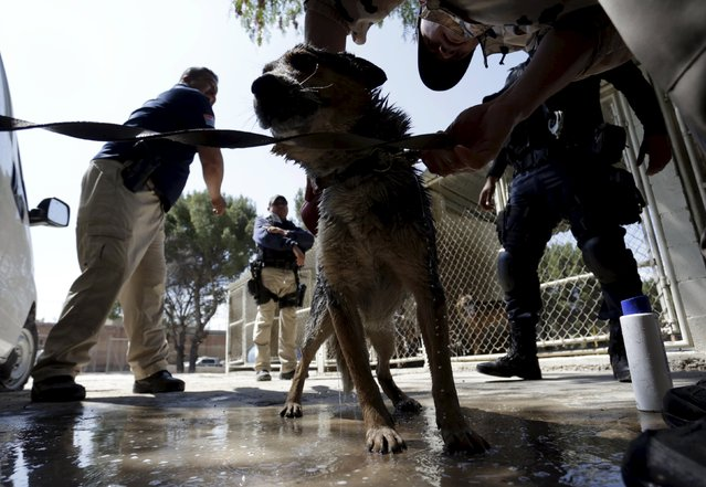 Police officers look on as a dog trainer works with a previously abandoned dog at a police centre in
