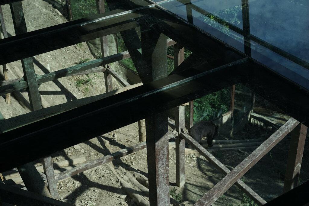 Медведь под стеклянным полом в зоопарке. Сафари-парк, Геленджик.