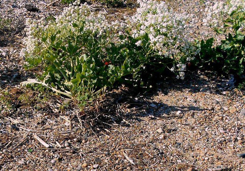 И на камних цветут, растут травы кусты ... DSCN5405.JPG