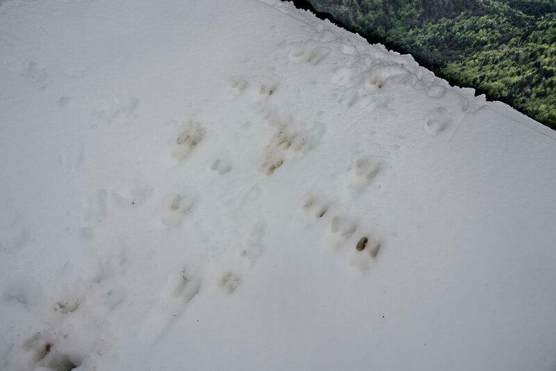 следы животных на снегу над обрывом