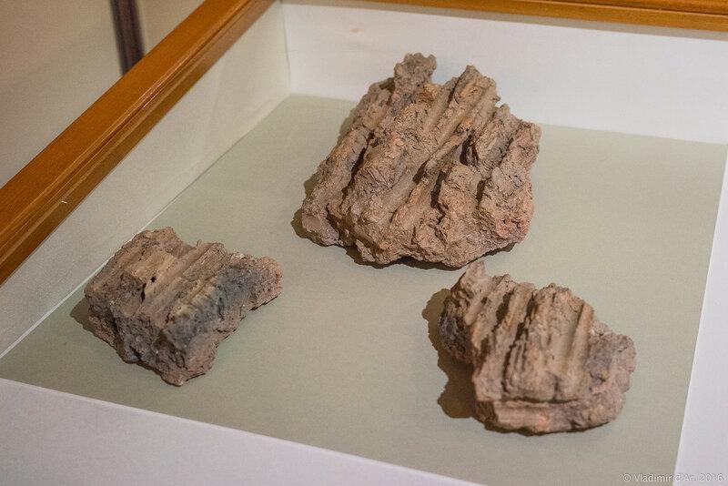 Обмазка стен глинобитного дома с отпечатком камышовых стен. Вторая половина V в. до н.э.