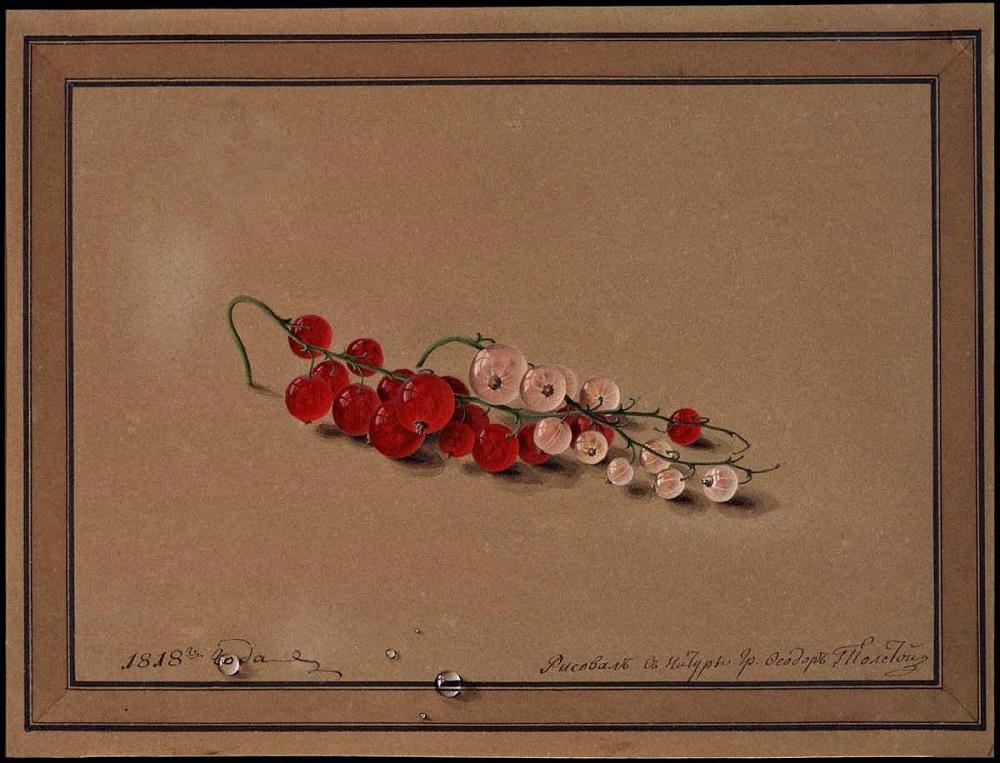 Толстой Федор Петрович (1783-1873). Ягоды красной и белой смородины Бумага коричневая, акварель, белила. 17,4 X 23,8. 1818 г.