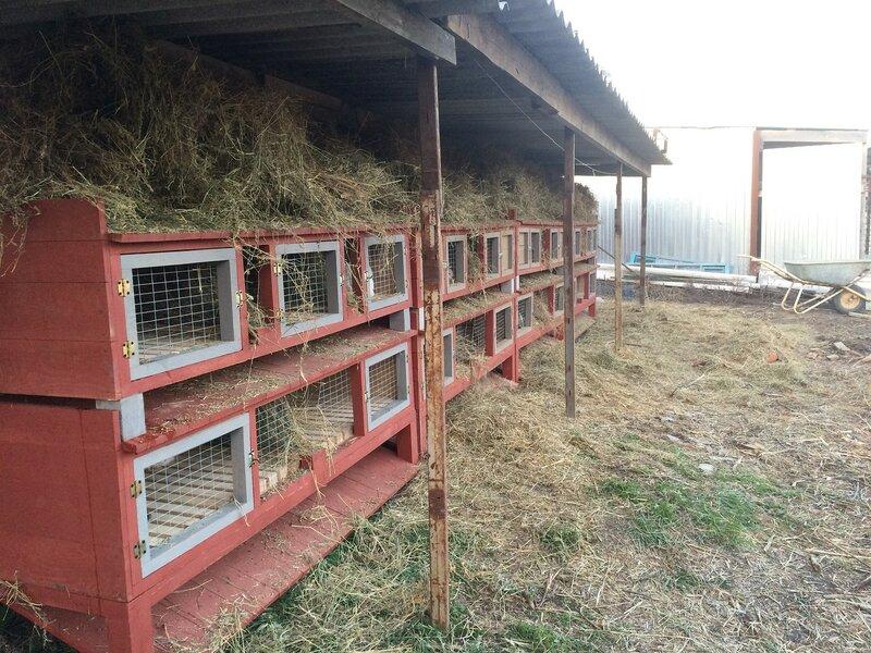 Кроличья ферма помещение своими руками 37