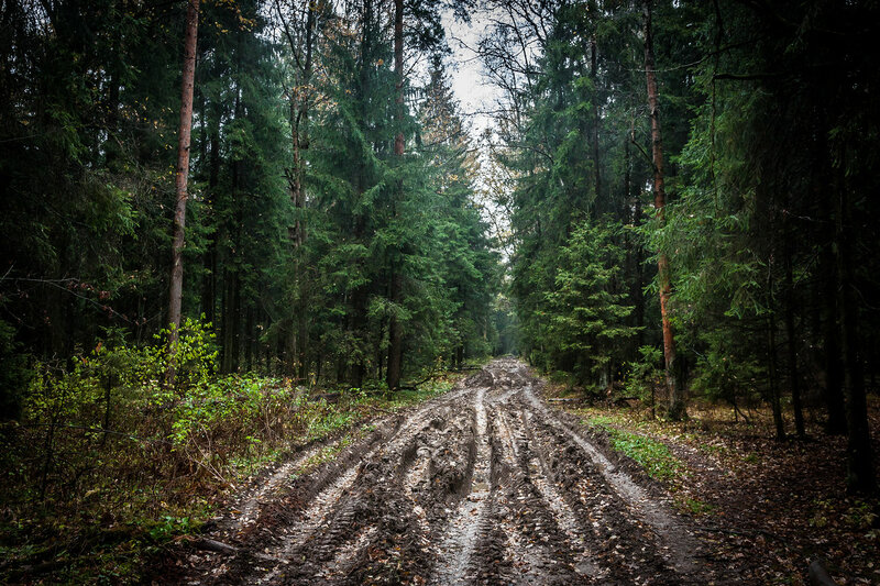 Шереметьевский лес. Лобня