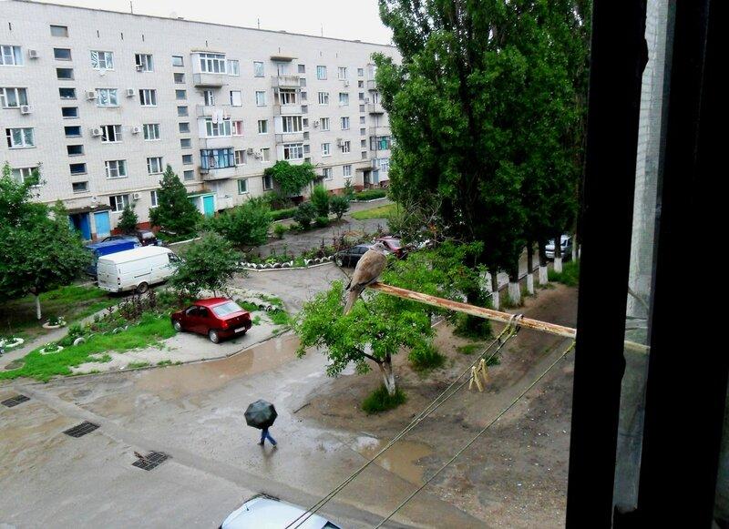 Дождь, летний вид ... SAM_0140.JPG