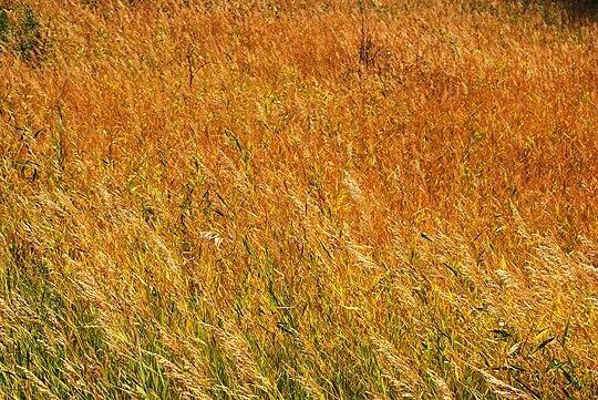 Первый цвет сентября