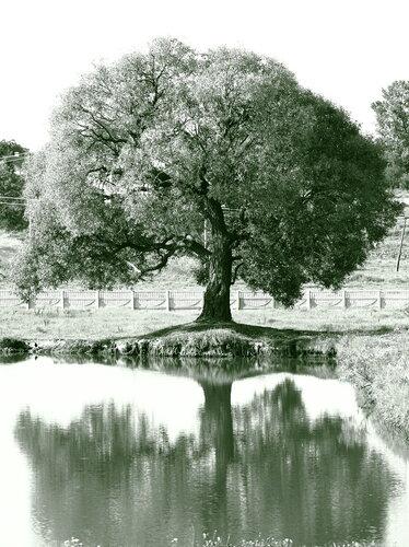 деревце