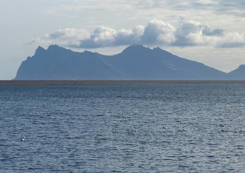 Краски Исландии (и лебеди)