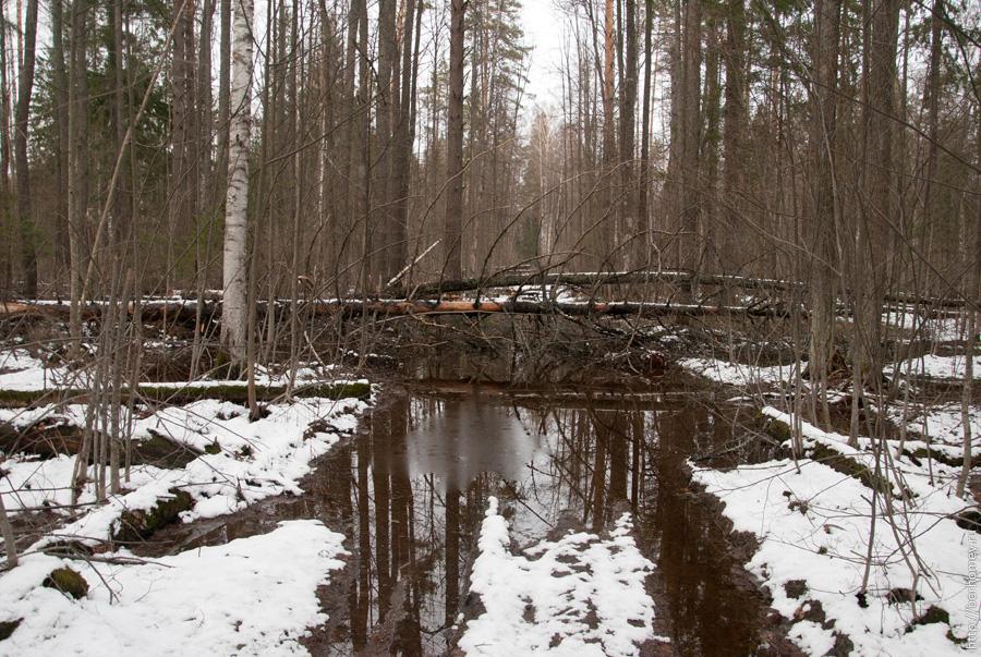 болота в лесу