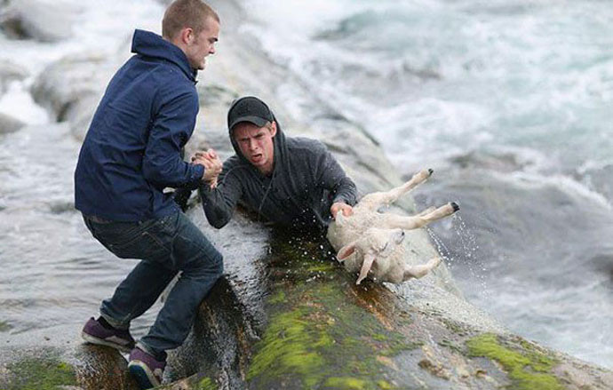 Как люди спасают животных 0 12cfe6 9cde2805 orig