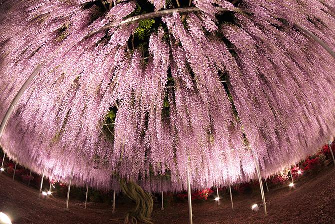 Одно из самых прекрасных растений на планете