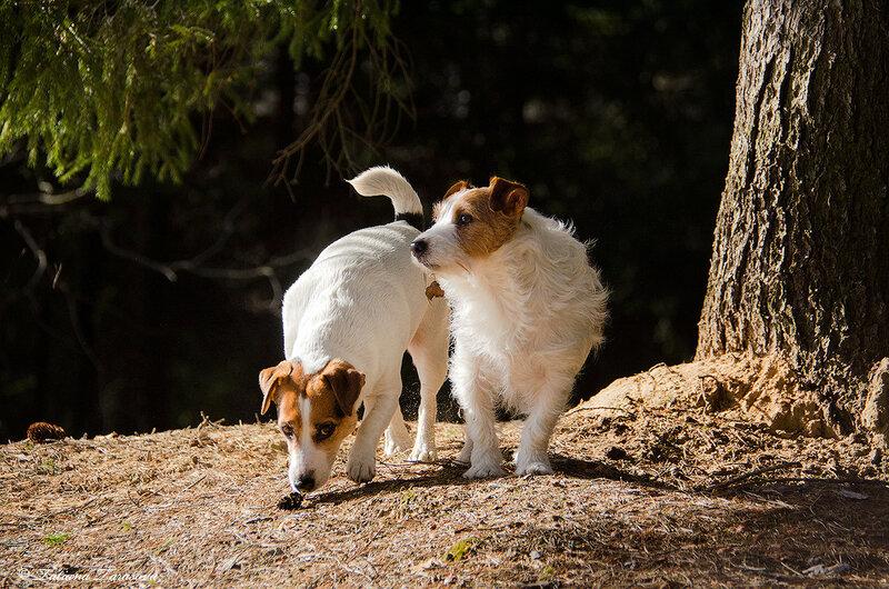 Тоша и Зара в весеннем лесу
