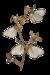 nicole-papillon.png
