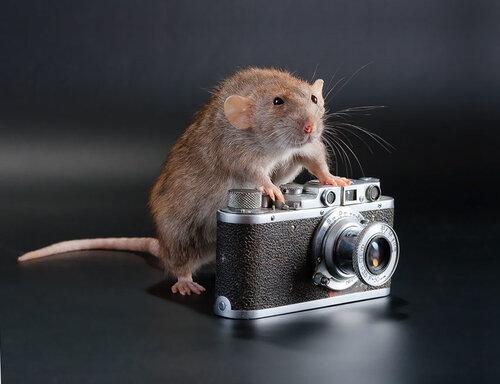 животные и фотоаппарат.