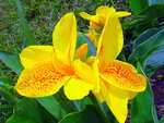 Солнечные цветы в январе. Шри-Ланка.