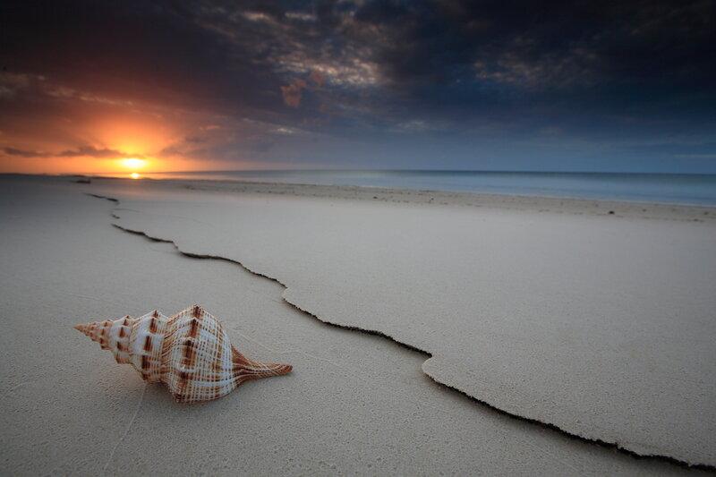берег моря ракушка