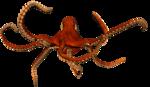 осьминог (2).png