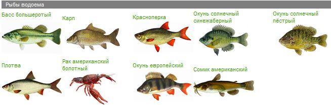 Рыбы водохранилища Гермасойи