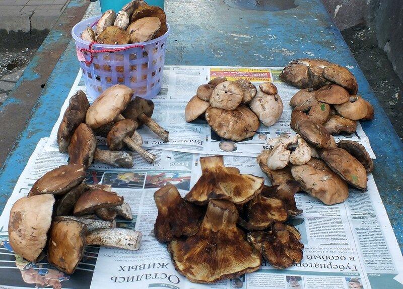 Как приготовить грибы коровники с картошкой