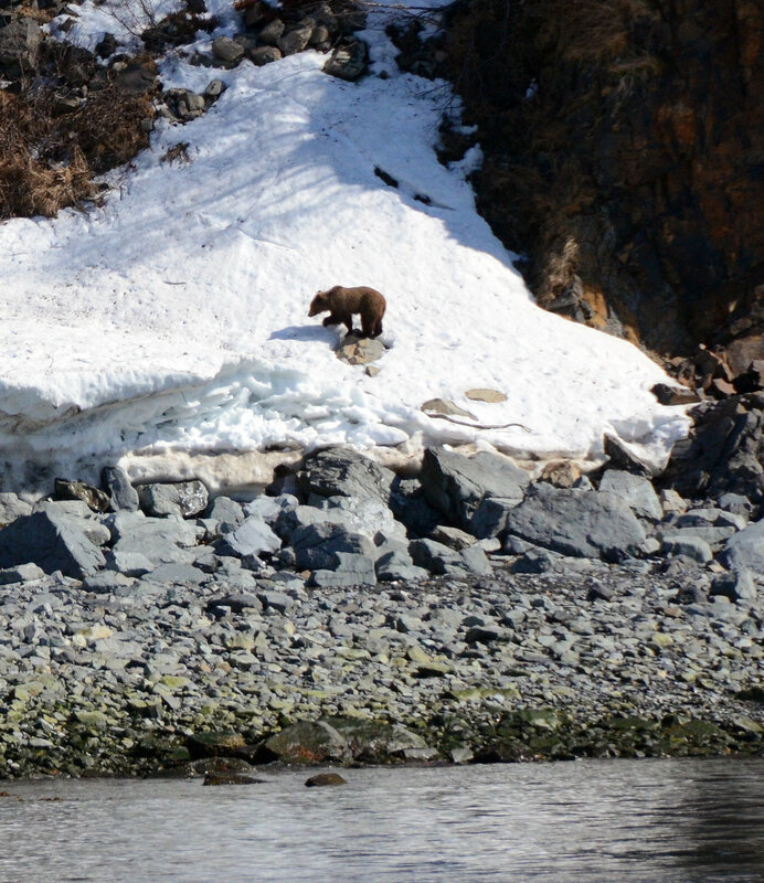 медведь на снежнике.jpg