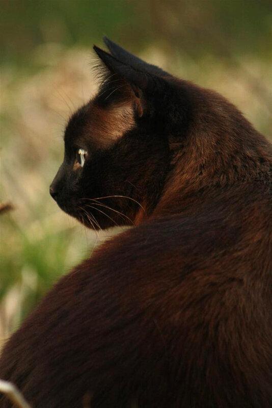 Кот-кот