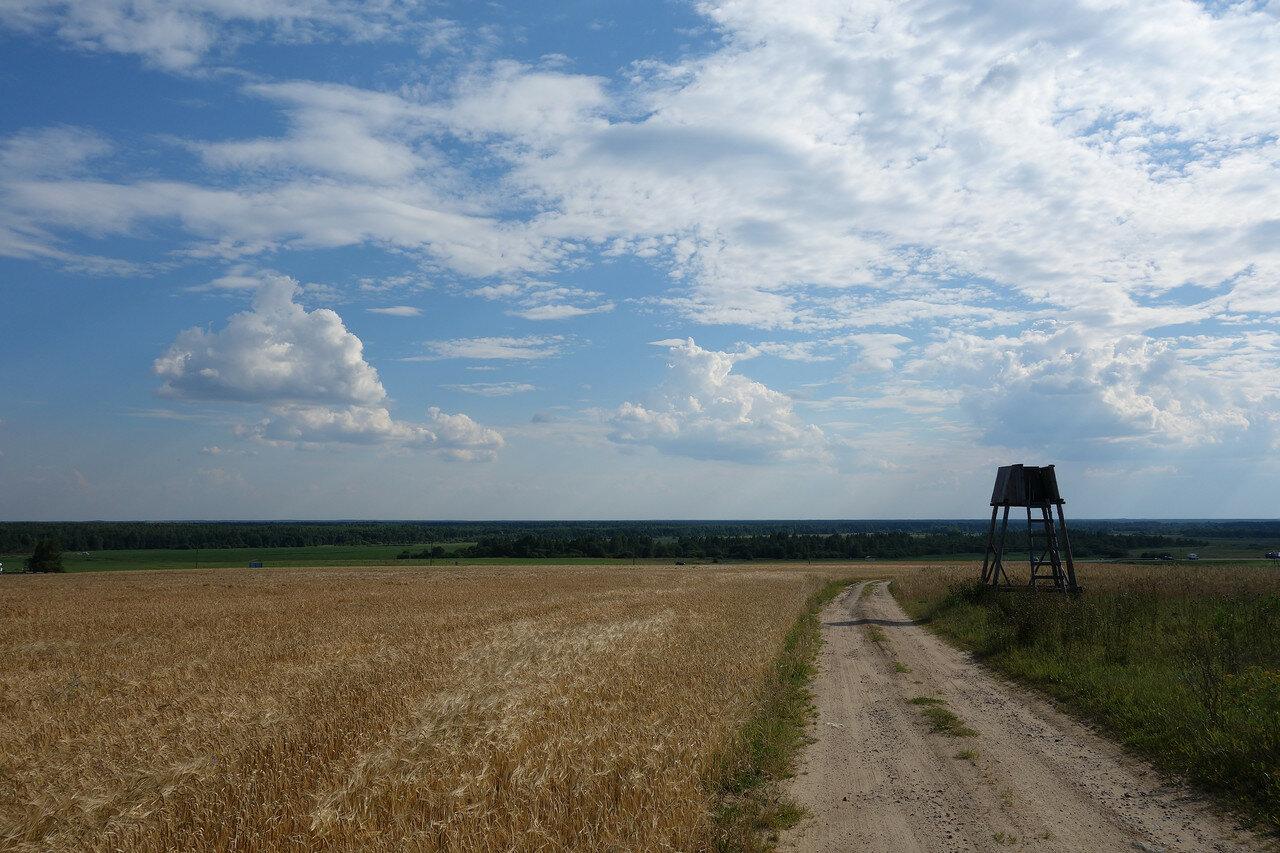 поле и вышка