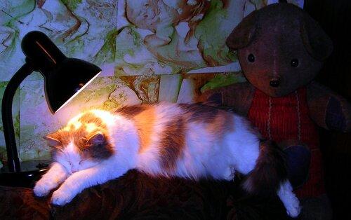 Тсссссс.....котя  спит.....)))))