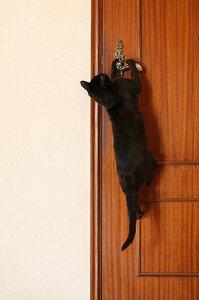 кот, дверь