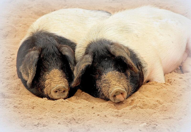 Мы с Хаврюшей на песочке