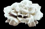 mzimm_snowflurries_flower1_sh.png