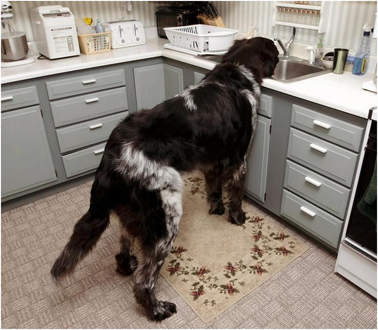 Да зачем мне миска? Мне и так удобно. (© Viktorija G).jpg