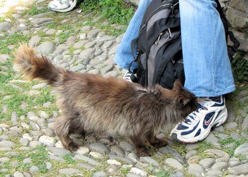 Андрей Себрант — «Кошак и туристы» на Яндекс.Фотках