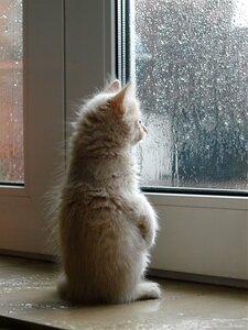 Мой первый дождь