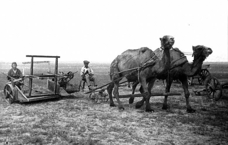 Колхозники сельхозартели им