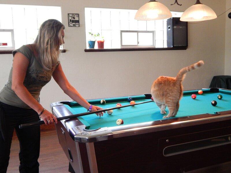 Котик-бельярдист.