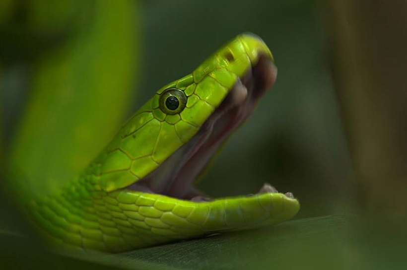 Пугающие фотографии змей 0 134ac6 3ae67799 orig