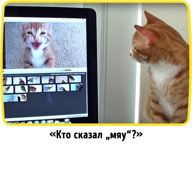 © YouTube  © YouTube   6.