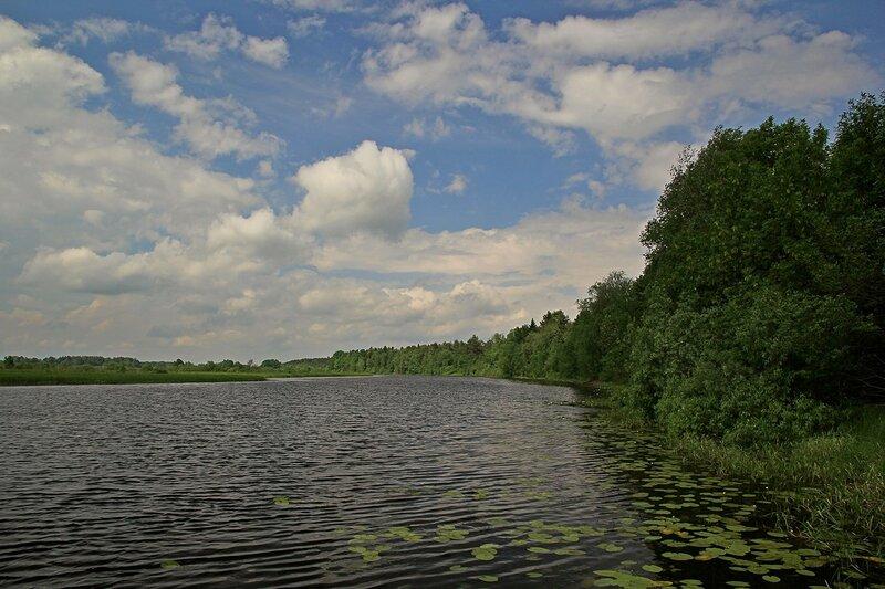 Красоты Чёрного озера: тёмная вода с круглыми листьями кувшинок и отражающееся в ней небо с белыми облаками