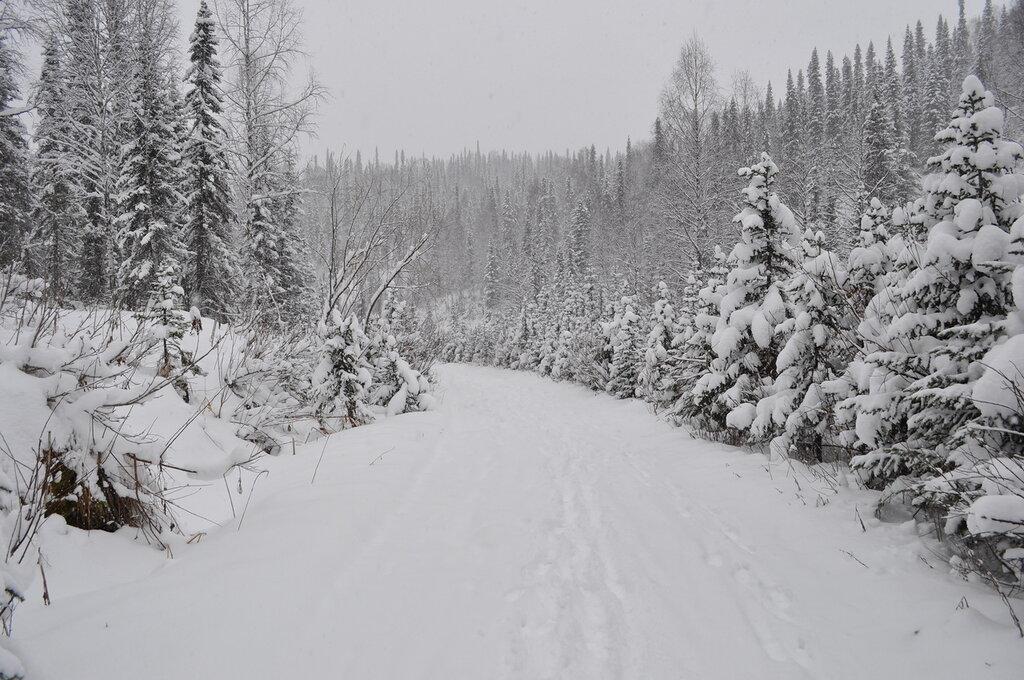 черно белая фотография зимней тайги выполнения макияжа круглом