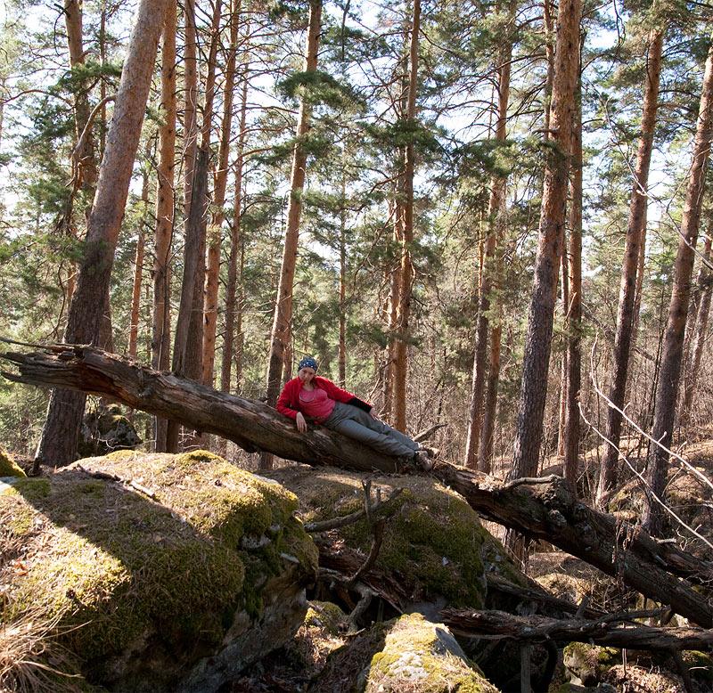 Лес на камнях и скалах