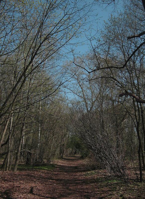 Весенняя аллея в лесу