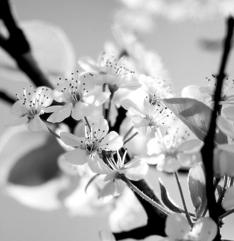 Получается, что мне больше нравится сепия и цветочки в монохроме (хотя есть и портреты, и пейзажики).