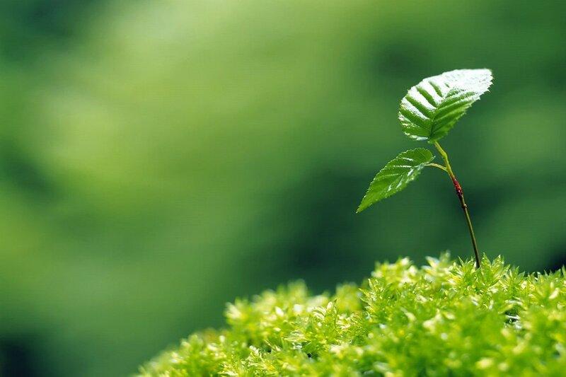 зеленое очарование